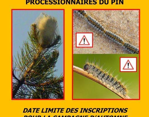 Campagne de lutte - Chenilles processionnaires du pin