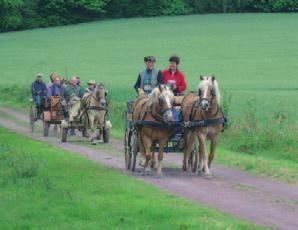 Randonnée en calèche et à cheval