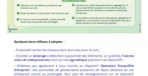 Préconisation Chevaux