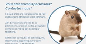 Recrudescence de rats